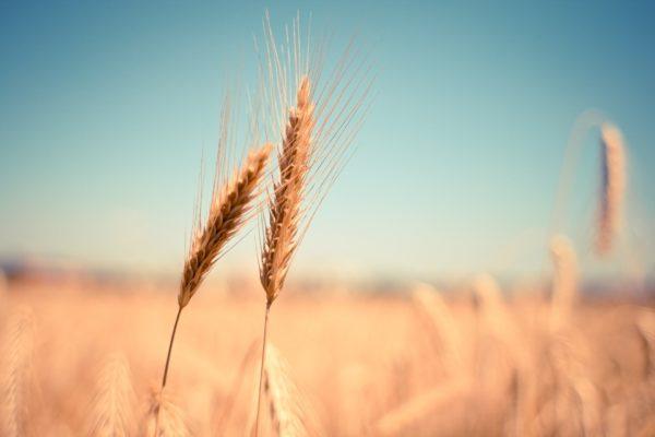 ¿cómo están las personas intercambiando criptomonedas rápidamente? cfds contínuos sobre trigo